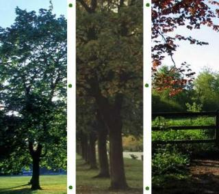 Public Shade Trees